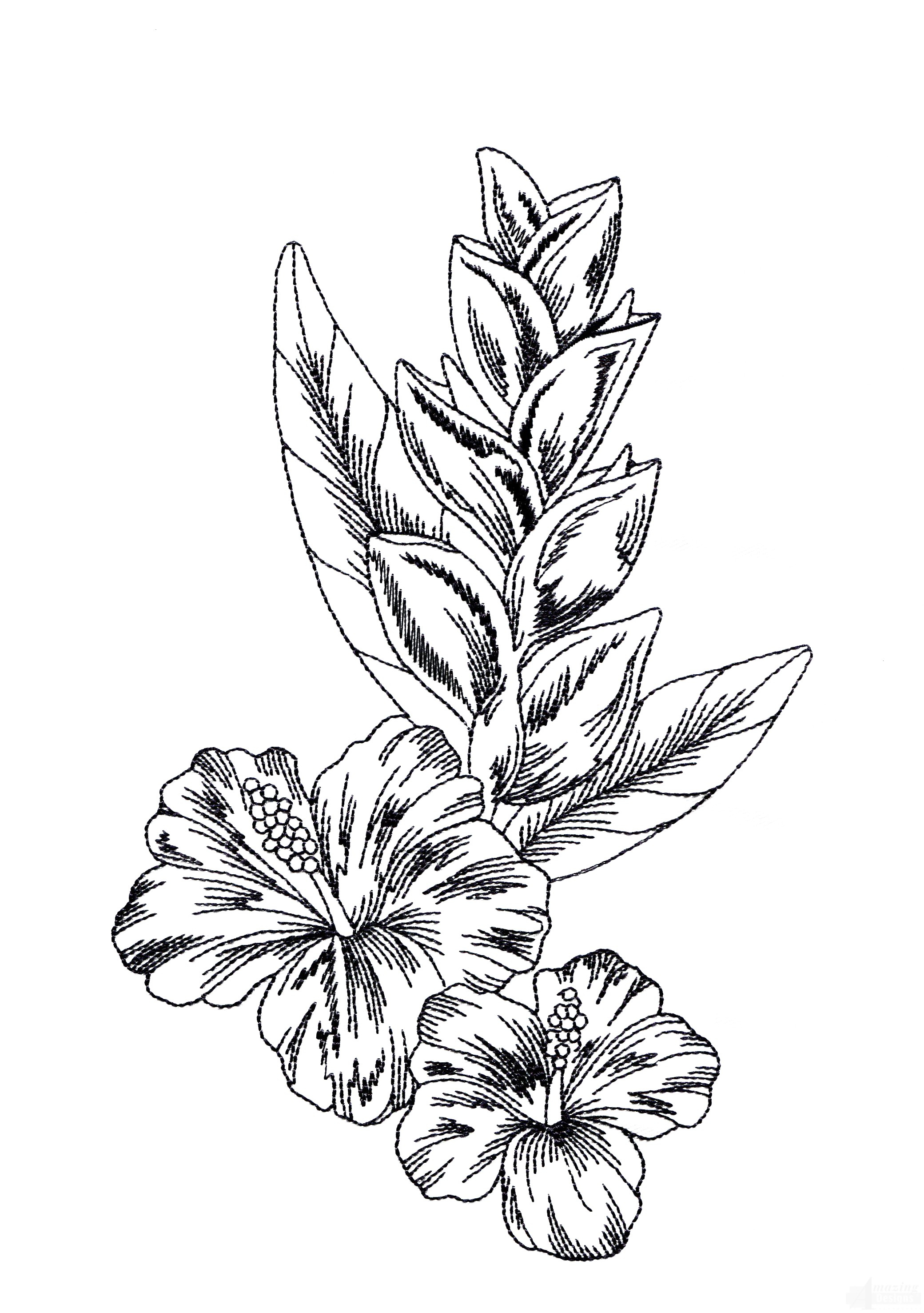 2080x2954 Tropical Flower Drawing Tropical Flowers Leaves Page Coloring Book