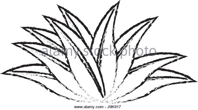 640x357 Tropical Leaves Icon Nature Plant Stock Photos Amp Tropical Leaves