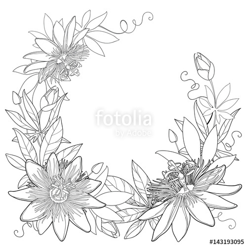 500x500 Vector Wreath With Outline Tropical Passiflora Or Passion Flowers
