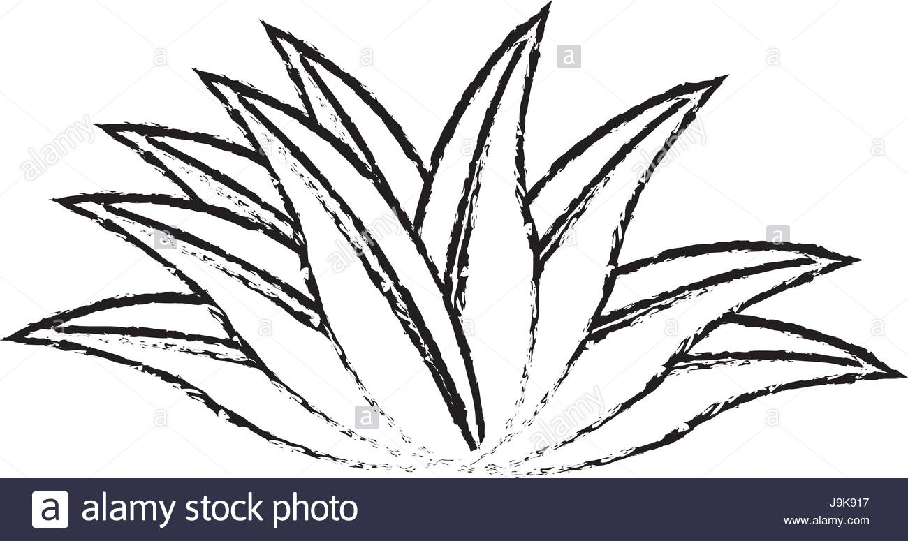 1300x775 Plant Leaves Natural Tropical Sketch Icon Stock Vector Art
