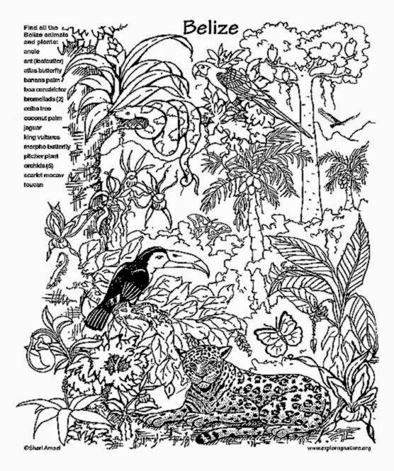 556x665 tropical rainforest animals coloring pages page image clipart