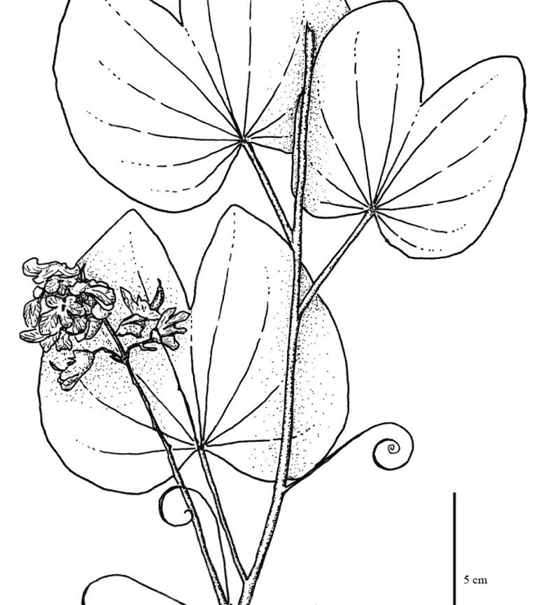 780x864 tropical rainforest plants coloring pages free printable adult and