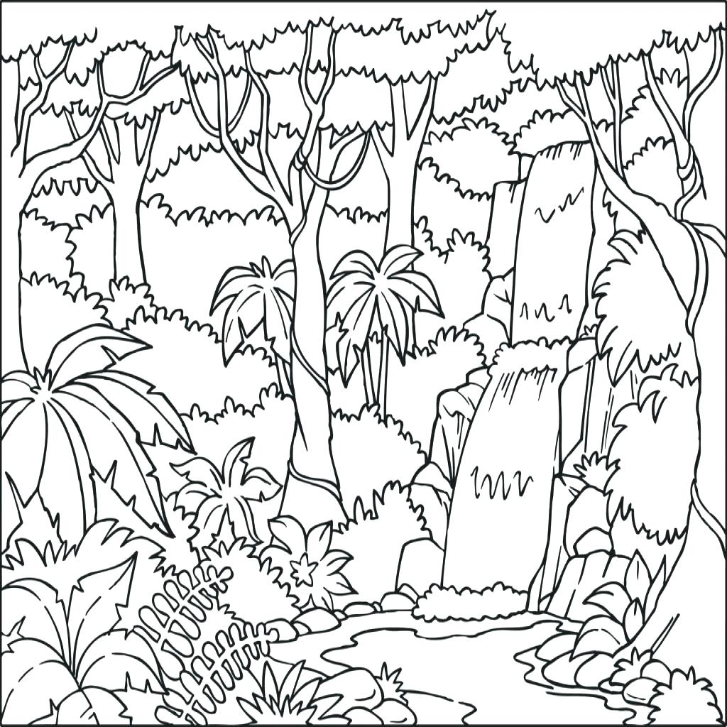 photograph about Rainforest Printable referred to as Tropical Rainforest Drawing at  Free of charge for