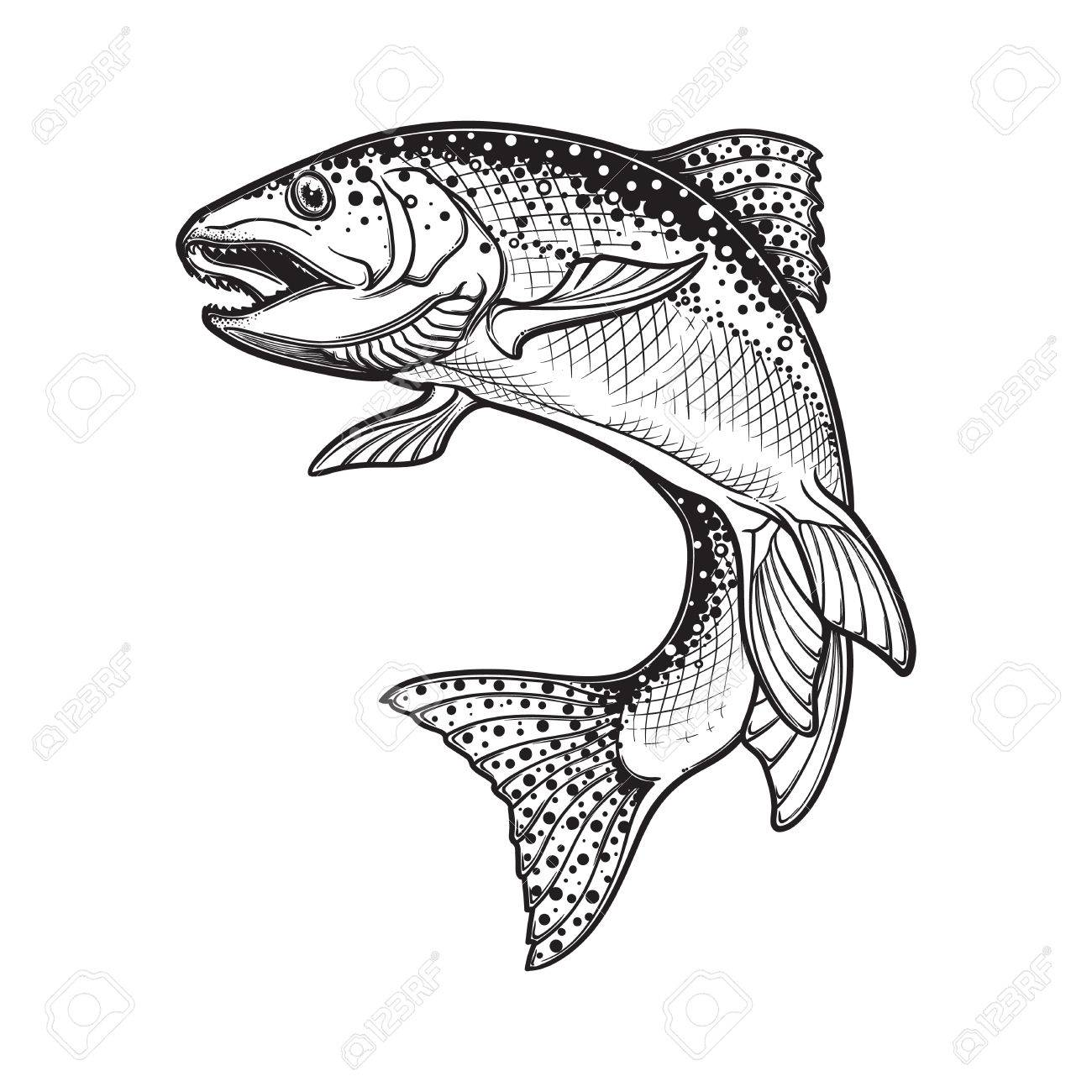 1300x1300 Realistic Intricate Drawing Of The Rainbow Trout Jumping Out