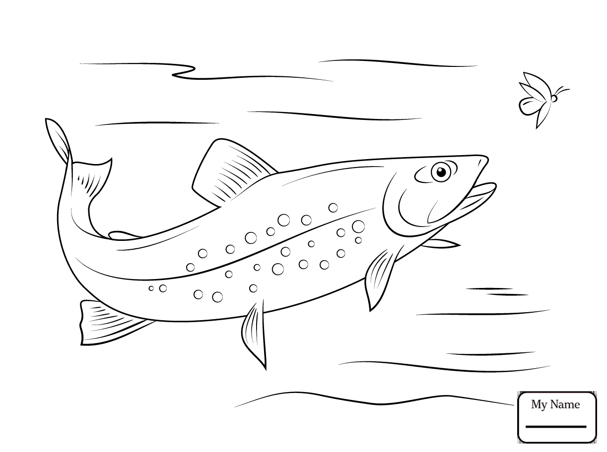 Trout Drawing at GetDrawings.com | Free for personal use Trout ...