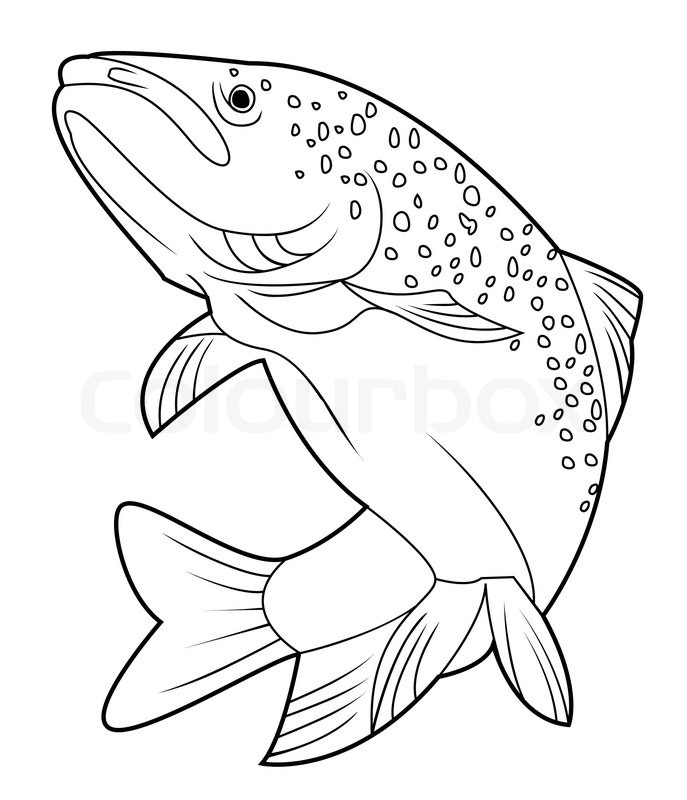 Trout drawing at getdrawings free for personal use trout 687x800 scrimshaw line drawings drawings i like pinterest drawings freerunsca Images