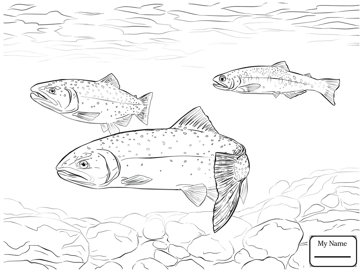 Trout Drawing at GetDrawings