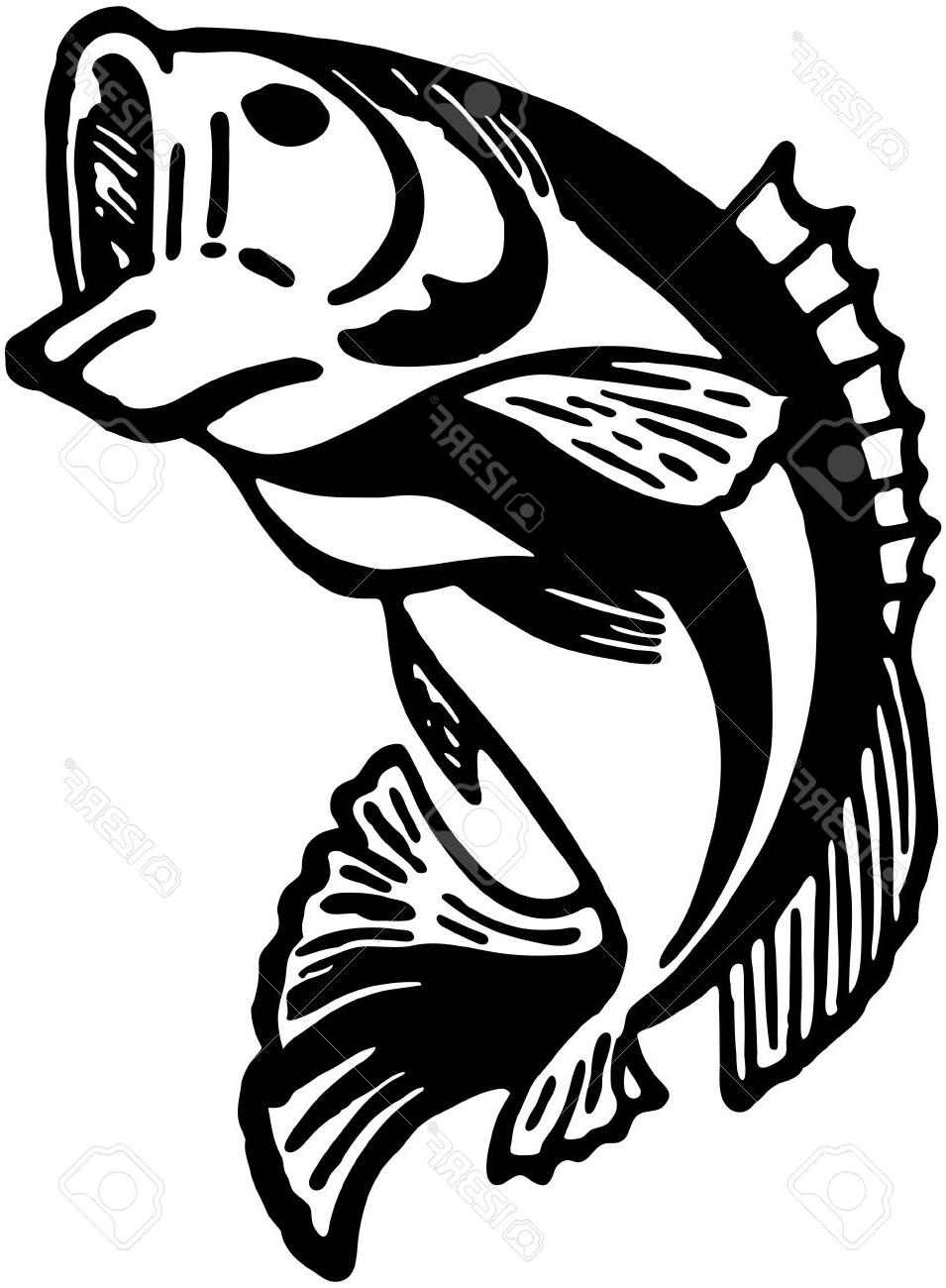 955x1300 Best 15 Leaping Fish Stock Vector Bass Trout Pictures