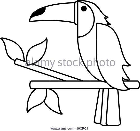 How To Draw A Toucan Art Hub