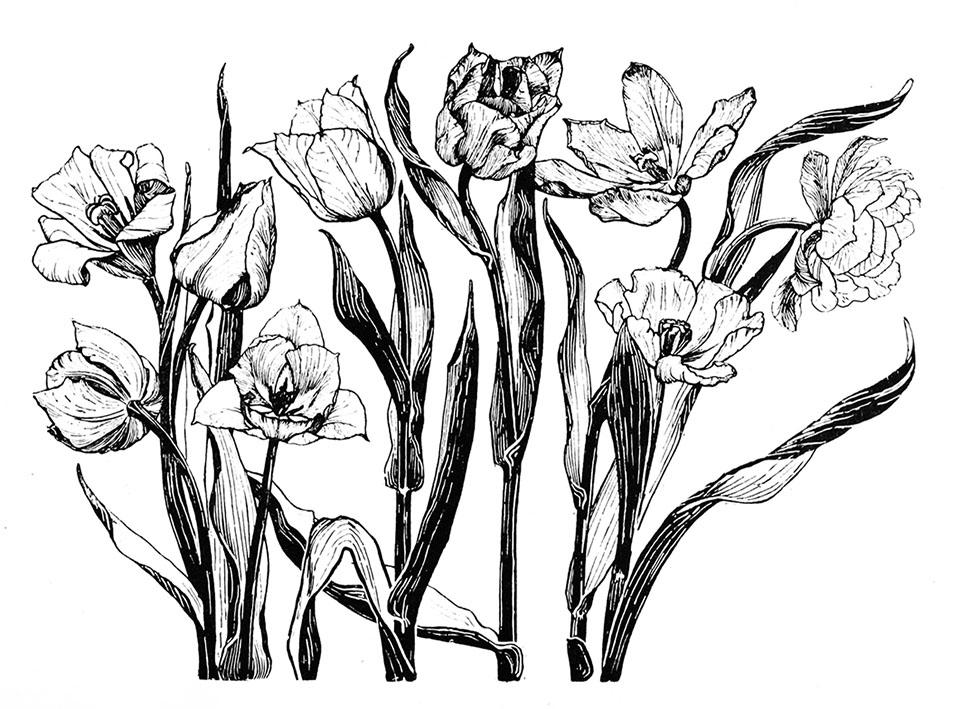 961x709 Flower Sketches