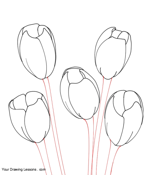 505x600 How To Draw Tulips Your Drawing Lessons