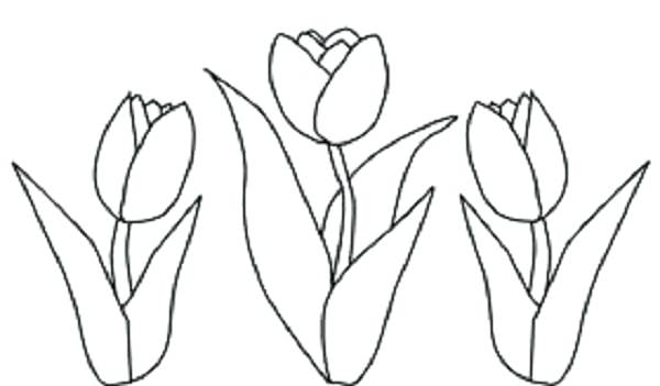 600x351 This Is Tulip Coloring Pages Pictures Tulip Coloring Pages Trend