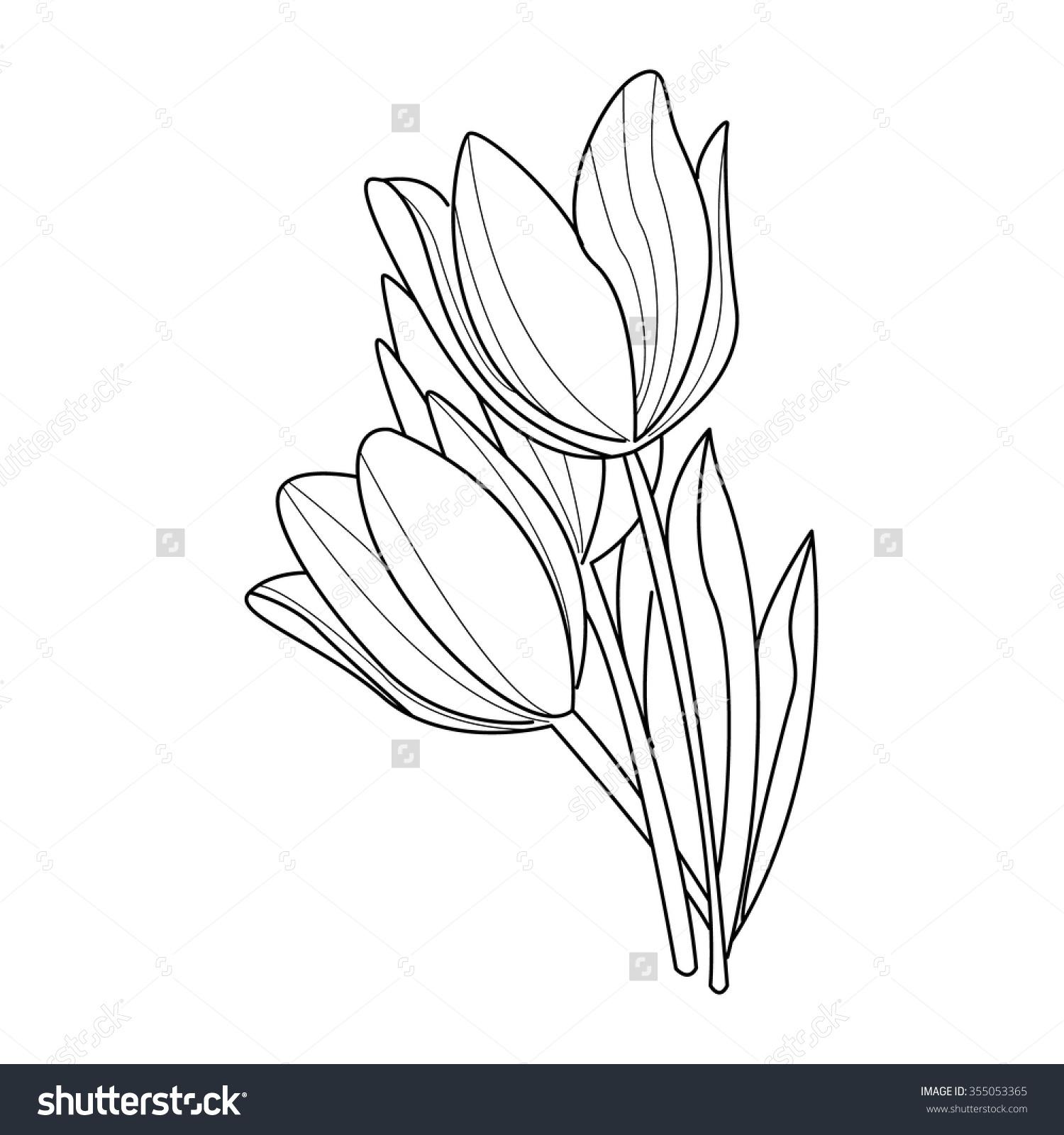 1500x1600 Tulip Flower Drawing