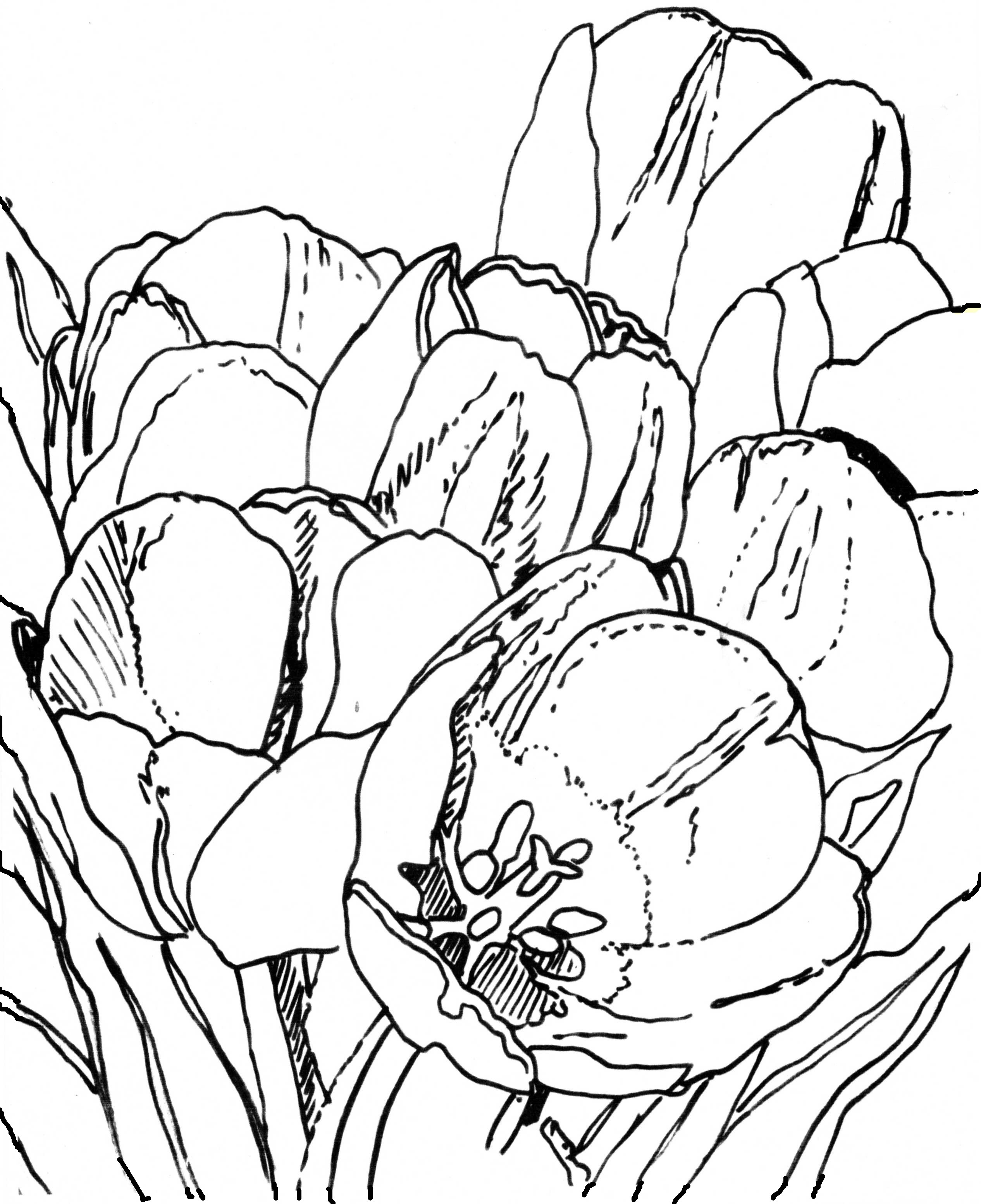 2532x3108 Angie's Art Lesson 2