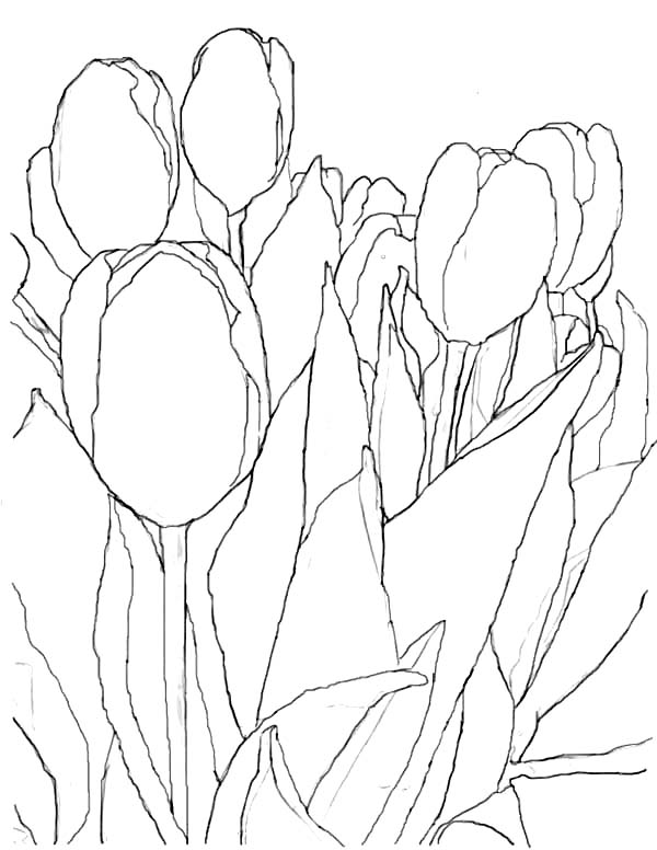 600x776 Tulips, An Artistic Pencil Sketch Of Tulips Coloring Page