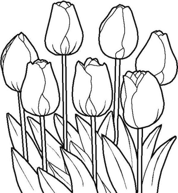 580x630 Wonderful Tulip Coloring Pages 13 With Additional Line Drawings
