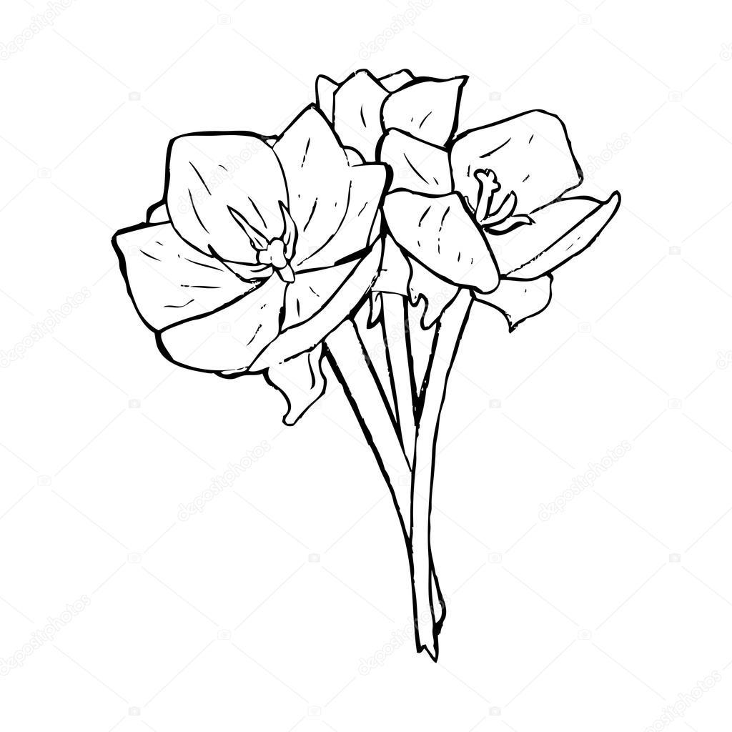 1024x1024 Open Tulip Drawing Stock Vector Lineartestpilot