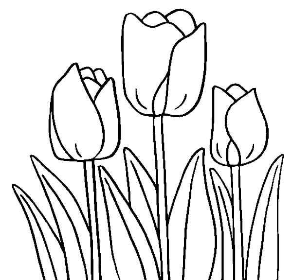 600x576 Coloring Pages Mesmerizing Tulip Coloring Pages 4 Tulip Coloring
