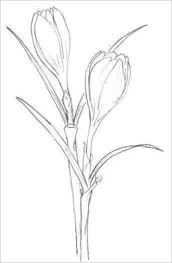 344x524 Easy Flowers To Draw