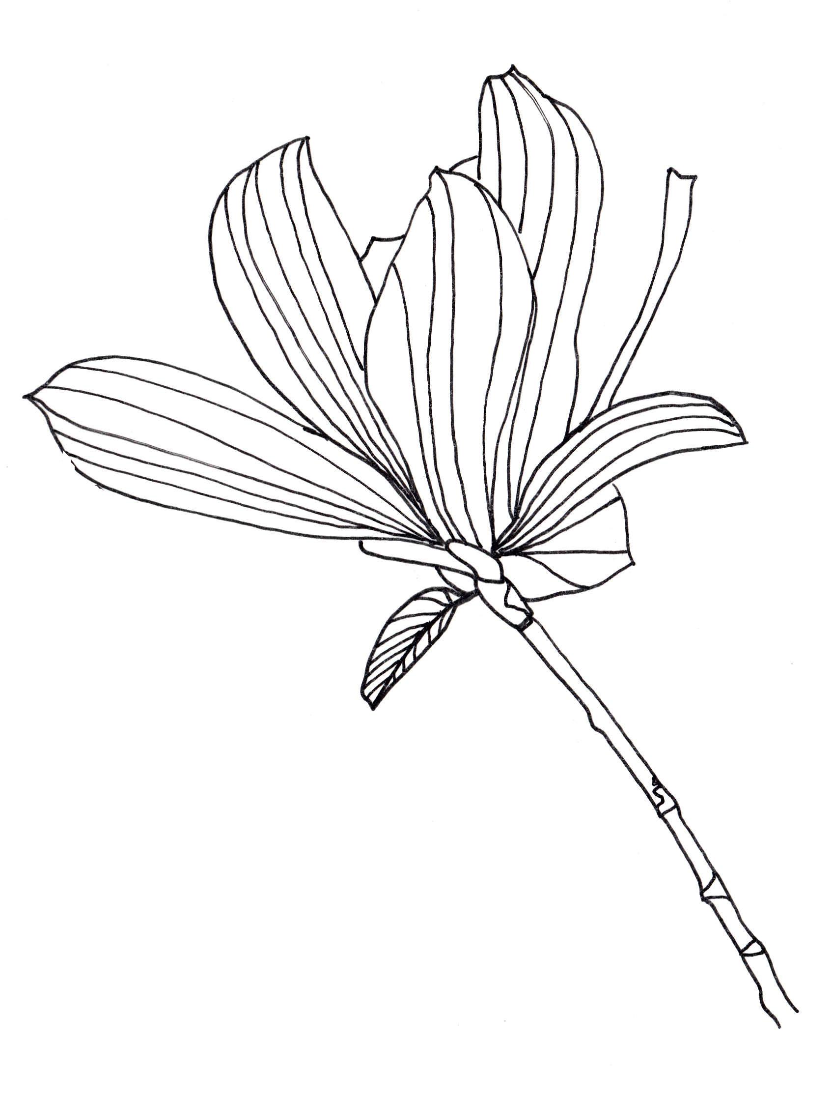 1696x2232 Drawn Tulip Leave Flower