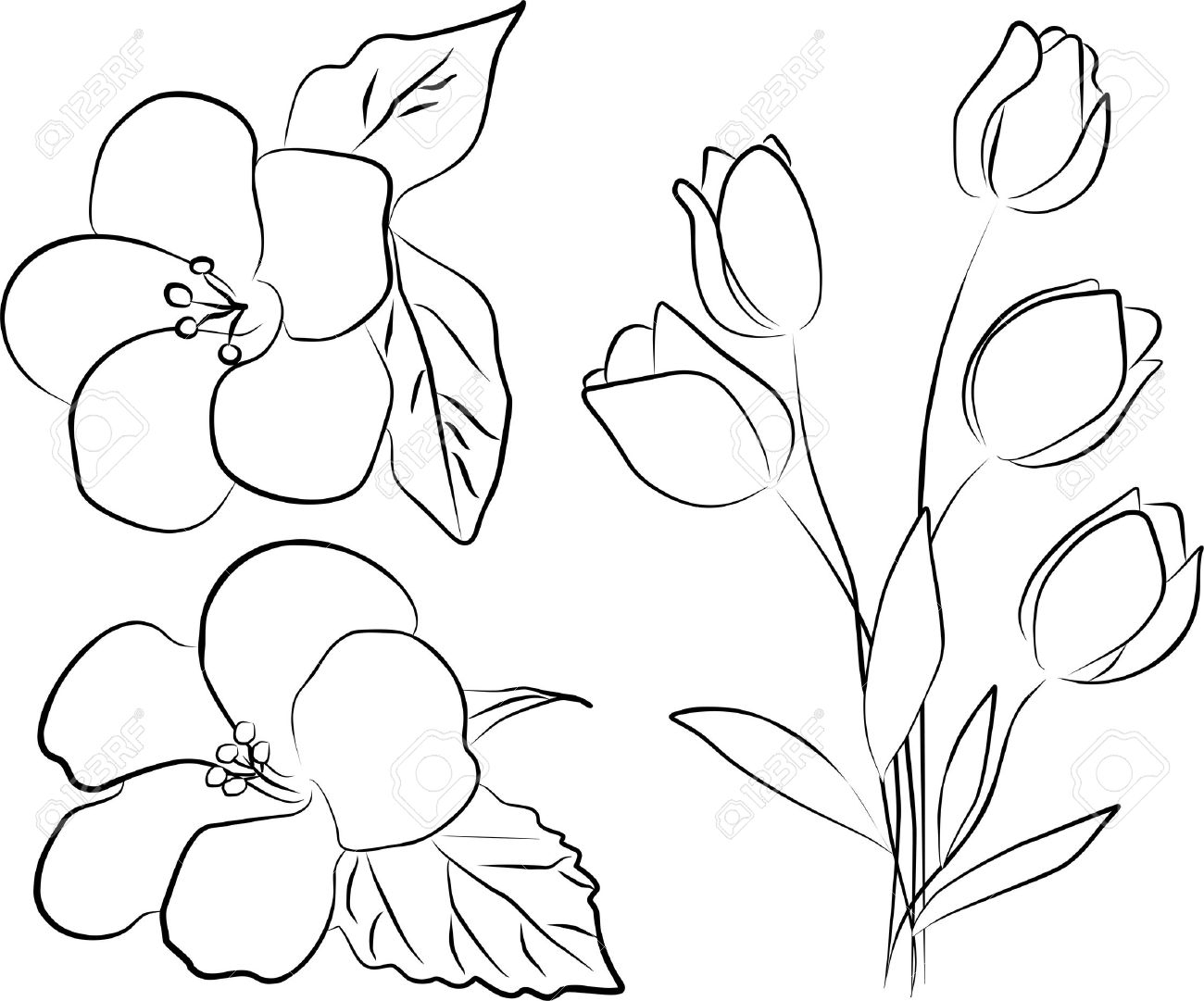 1300x1081 Free Hand Flower Drawings Two Hibiscus Flowers And Tulip Bouquet