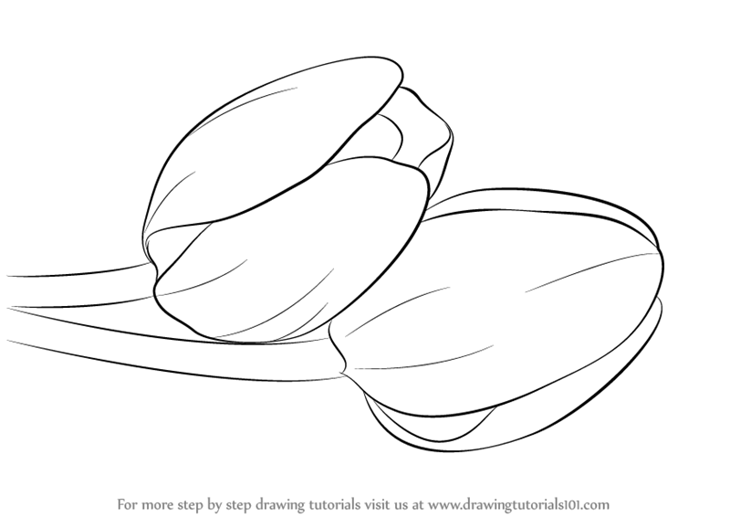 800x566 Learn How To Draw Tulips (Tulips) Step By Step Drawing Tutorials