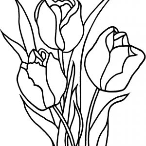 tulip drawing step by step at getdrawings com free for personal