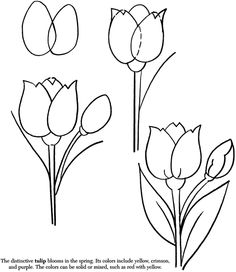 236x272 How To Draw A Tulip Doodle Doodles