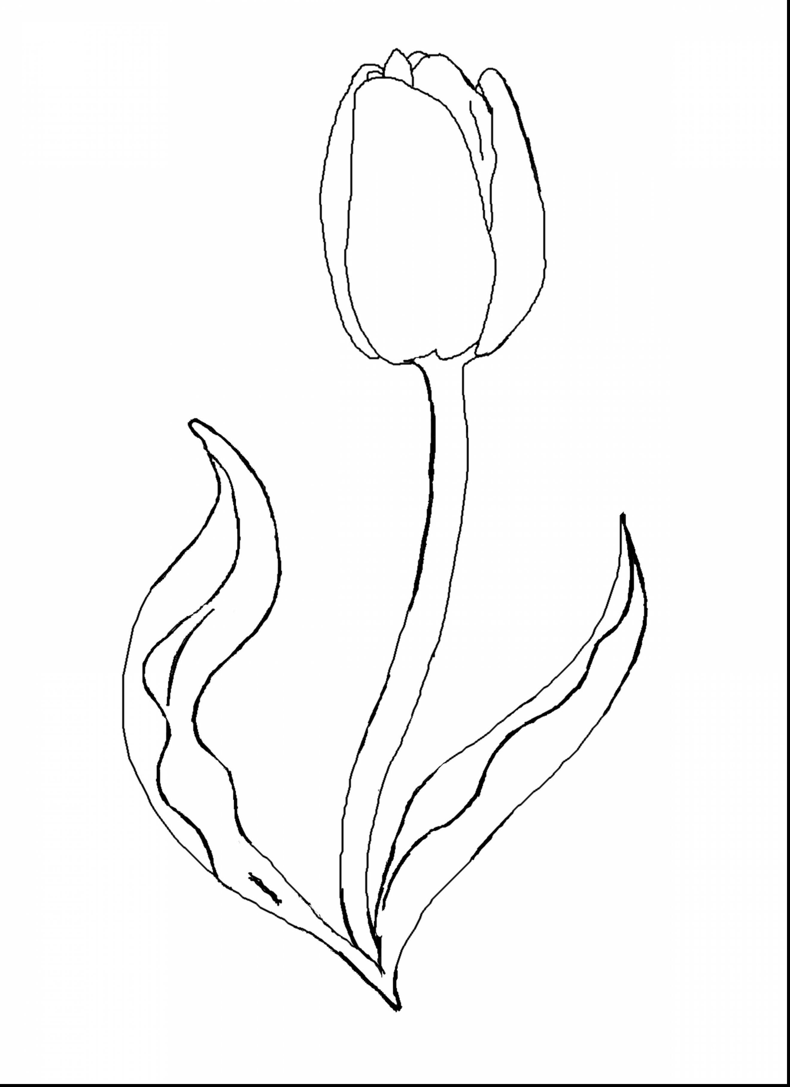 Tulip Drawing Step By Step at GetDrawings | Free download