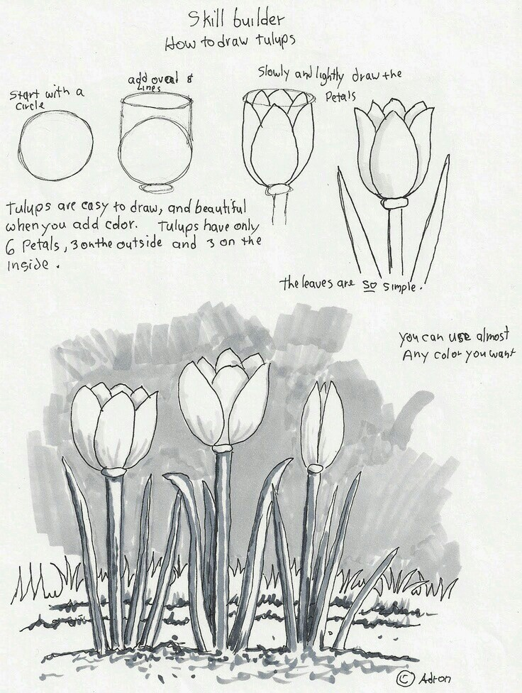 736x976 Draw Tulips Learn To Draw Drawings, Doodles