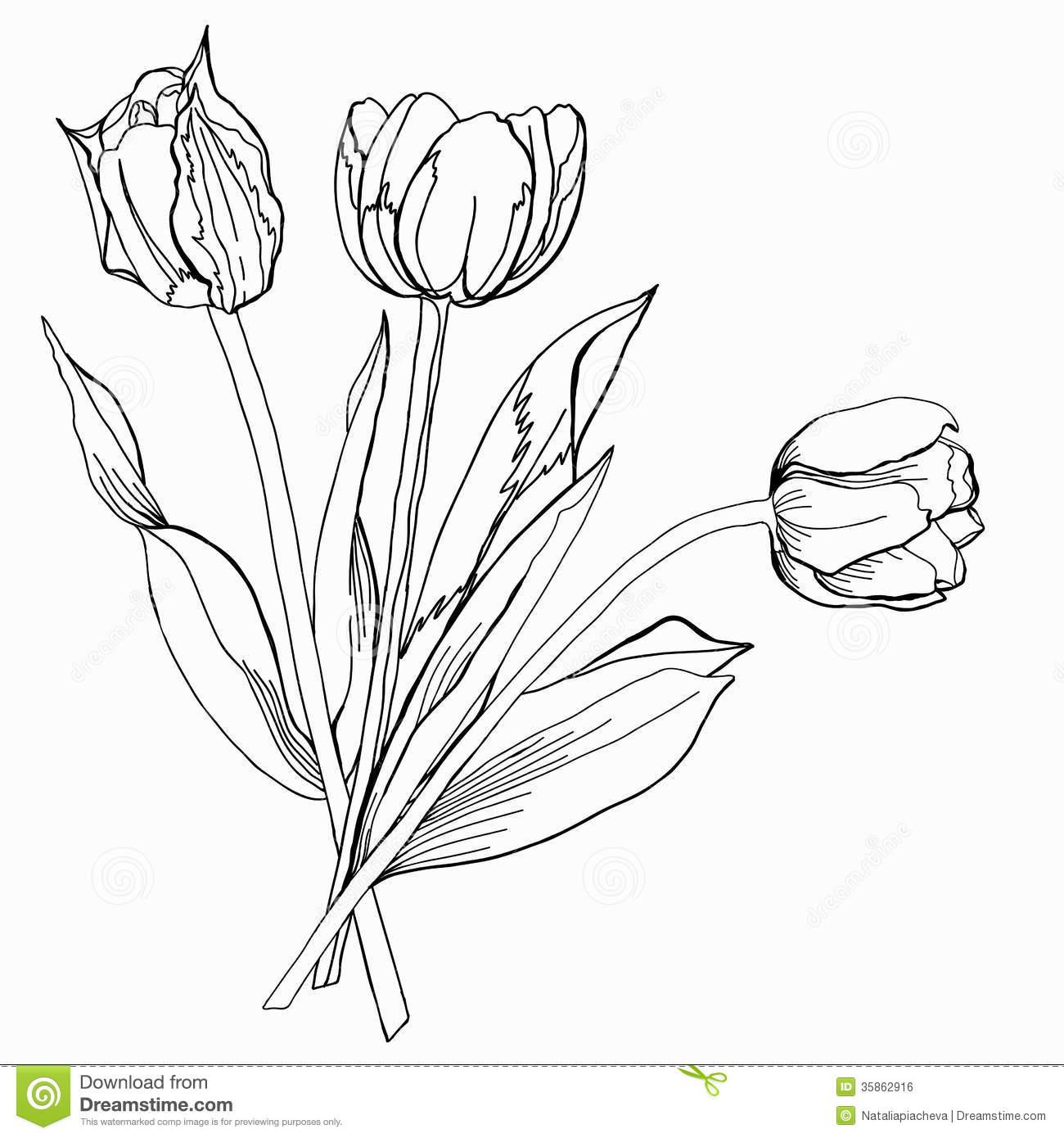 1300x1390 Drawn Tulip Tulip Bouquet