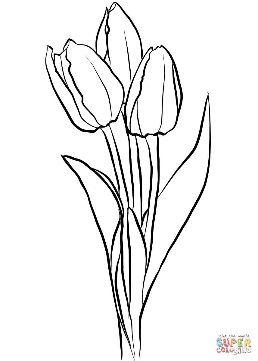 857x1200 Printable Tulip Coloring Pages For Kids To Download Beautiful Free