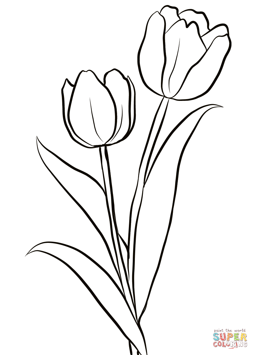 857x1200 Realistic Three Tulips Coloring Page Free Printable Beautiful