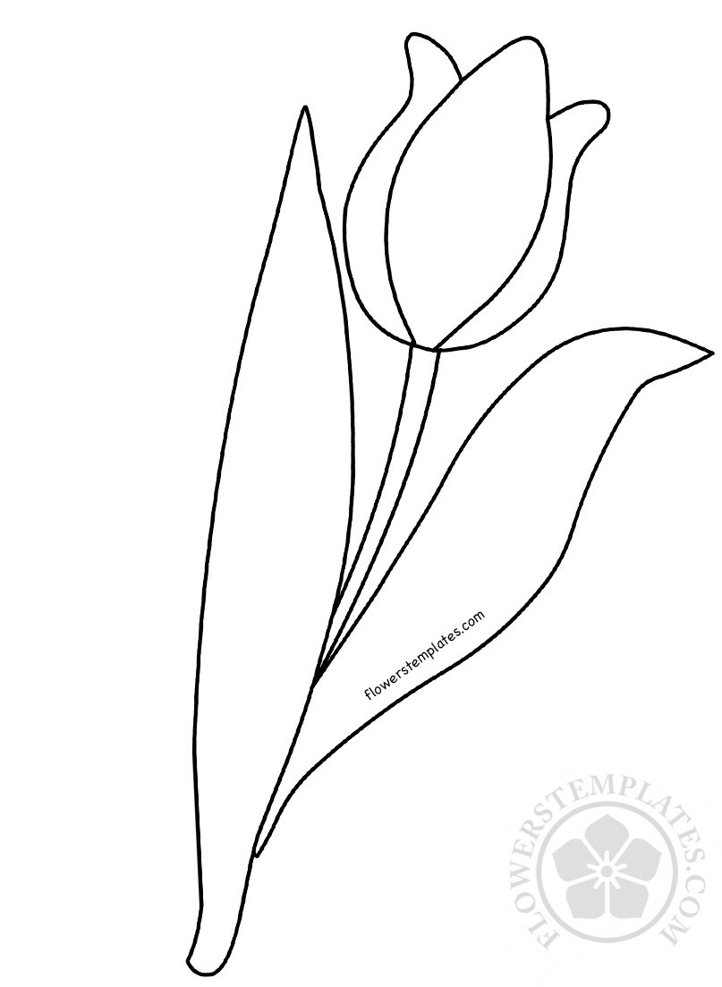 807x1103 Tulip Flowers Templates