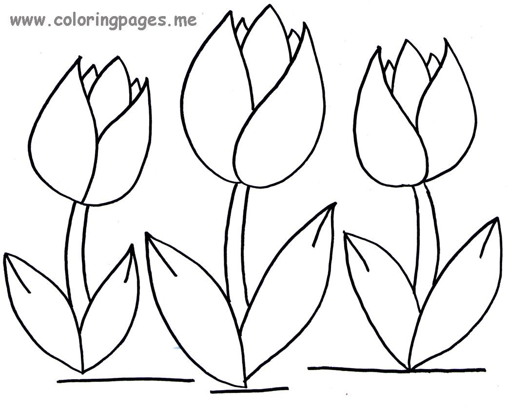 Tulip Flower Drawing At GetDrawings
