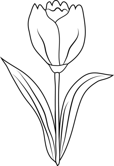 378x550 Tulip Flower Coloring Page
