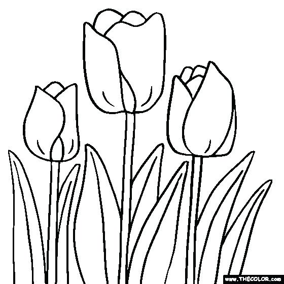 560x560 Tulip Pictures To Color Larger Image Tulip Flower Pictures Color