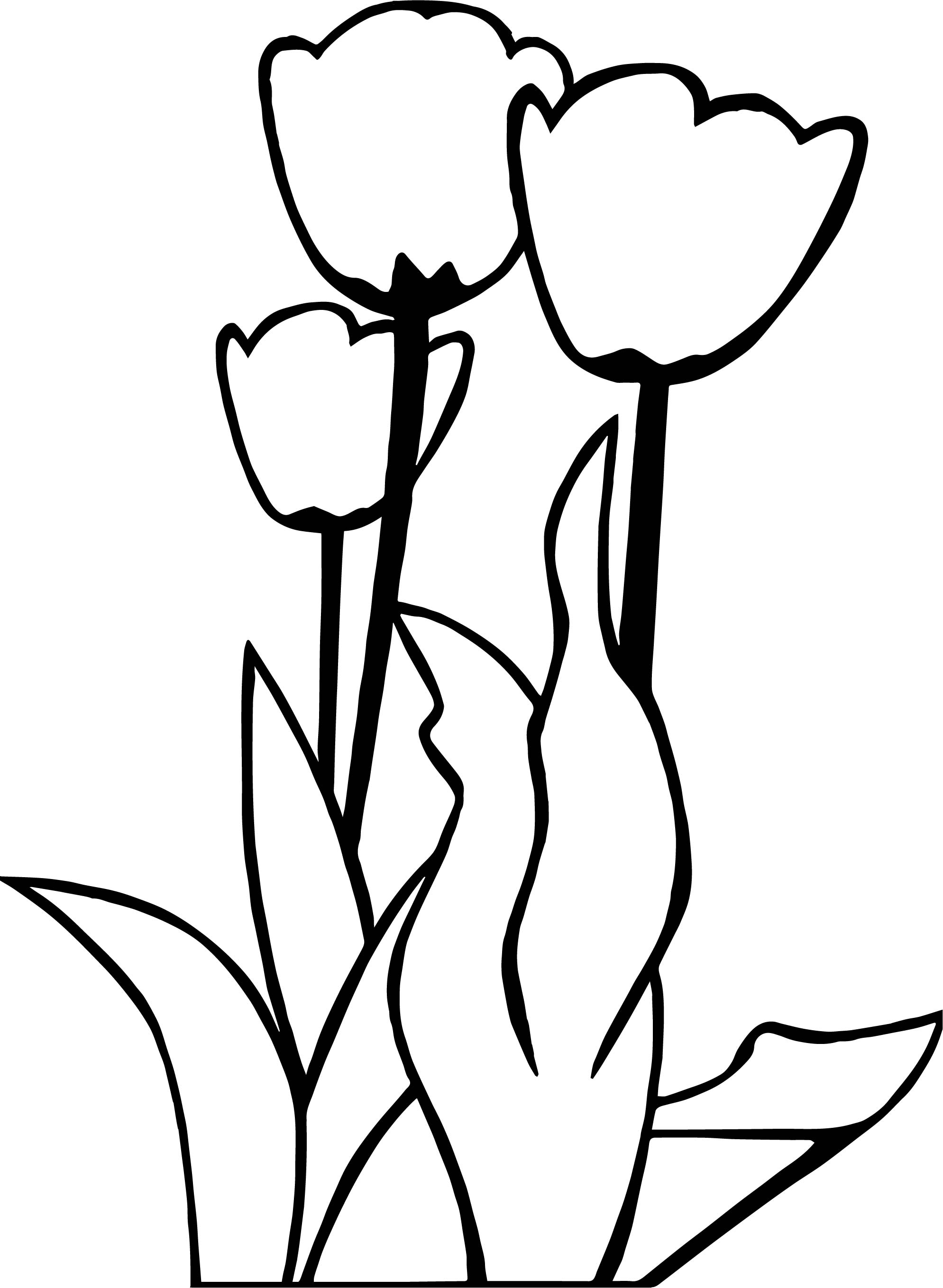 1989x2718 Tulips Flower Coloring Page Wecoloringpage