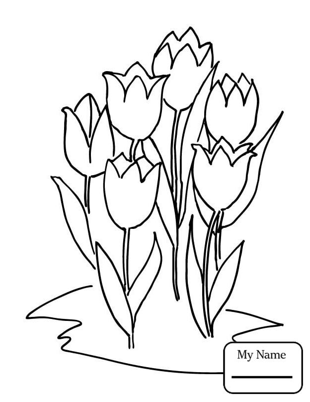 624x808 Coloring Pages For Kids Tulip Six Tulips Flowers