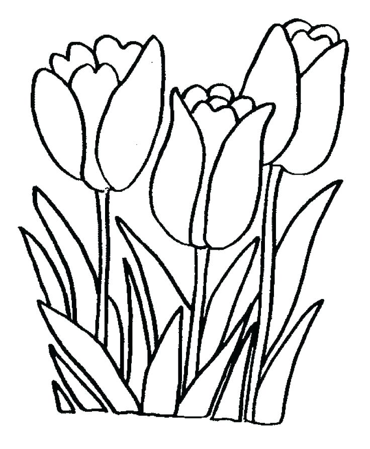 Tulip Flower Drawing at GetDrawings.com | Free for personal use ...