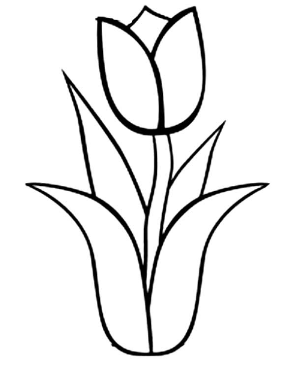 600x777 Coloring Pages Charming Tulip Coloring Pages Tulip Coloring