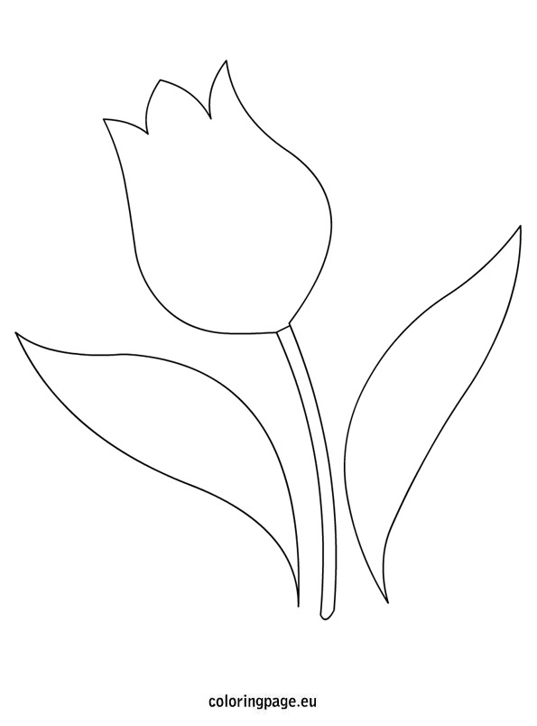595x804 Fantastic Tulip Template Printable Pictures Inspiration