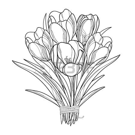 450x450 Illustration Of A Bouquet With Outline Crocus Or Saffron Flowers