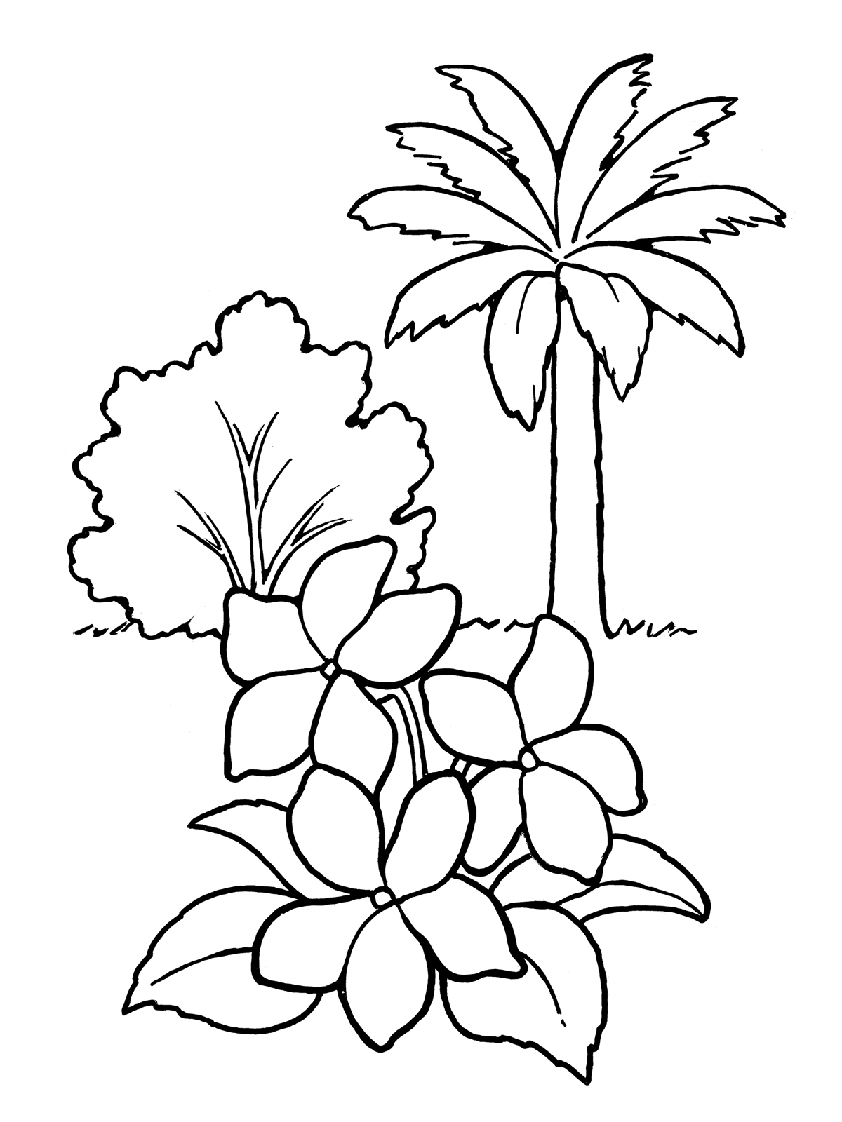 1200x1600 Picture Of Flowers Of Plants Drawing Tulip Flower Outline Pretty