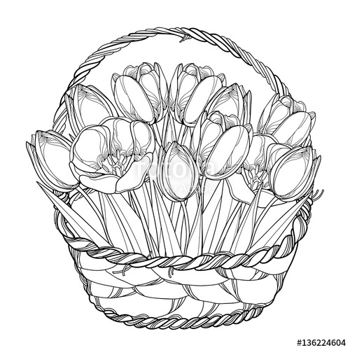 500x500 Vector Bouquet With Outline Tulips Flowers In The Basket Isolated