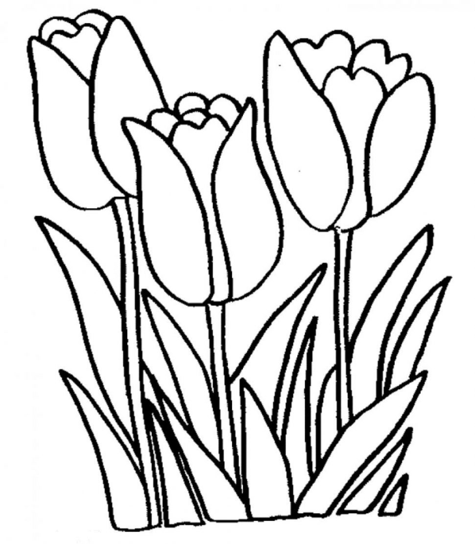 970x1111 Coloring Pages Tulip Coloring Pages Tulip Flower Coloring Pages