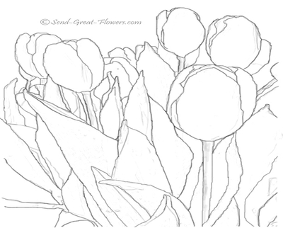 400x322 Drawn Tulip Coloring Book Tulips An Illustration Of Single Double