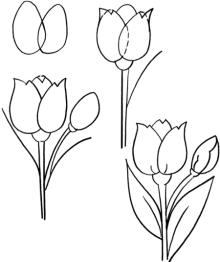 220x262 Drawn Tulip Different Flower