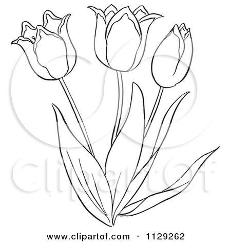 Tulips Drawing At Getdrawings Com