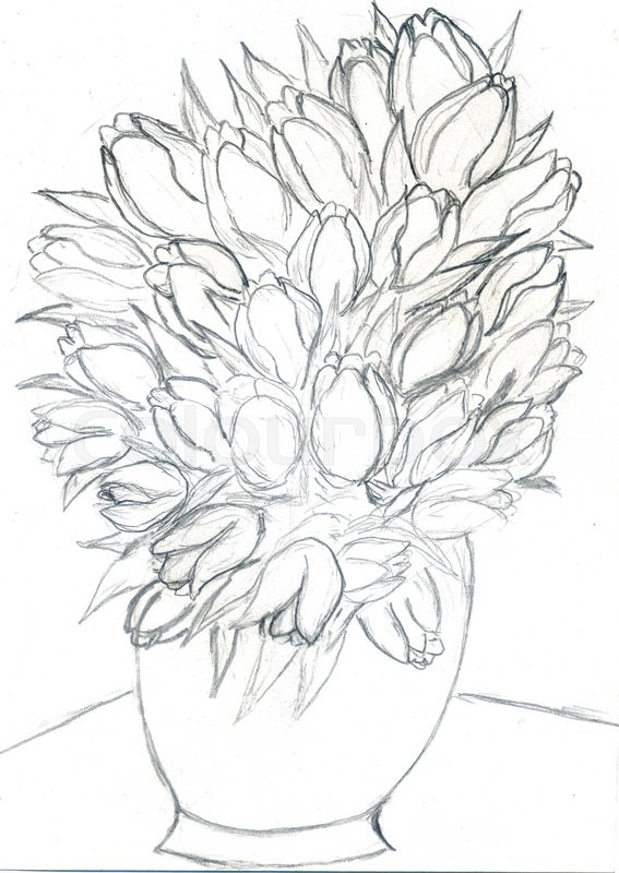 Tulips Pencil Drawing At Getdrawings Free For Personal Use